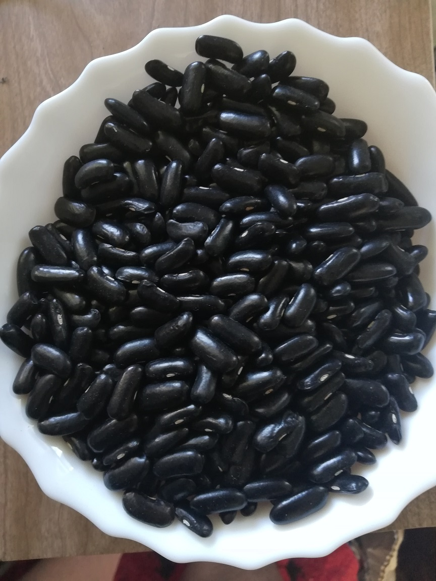 Bean - Crystal - 109RW11A