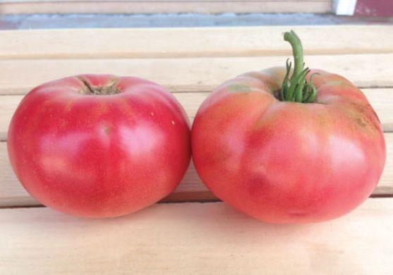 Tomato - Pink Brandywine - 17RW85