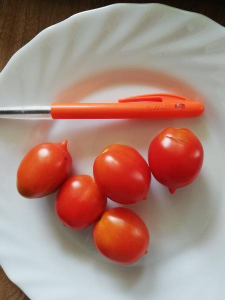 Tomato Riesentraube 33RW55A