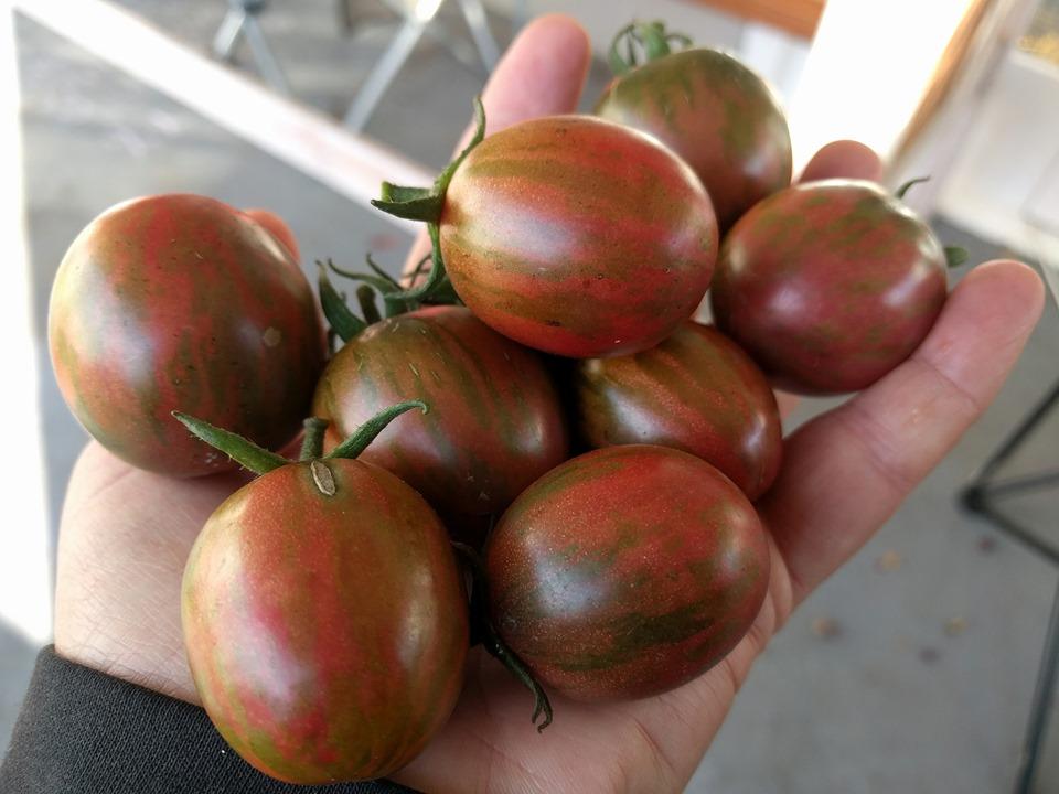 Tomato - Violet Jasper - 160MT100