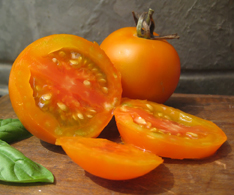 Tomato - Jaune Flamme - 125MT49B