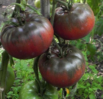 Tomato - Black Brandywine - 157MT98A