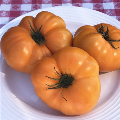 Tomato - Yellow Brandywine 156MT98