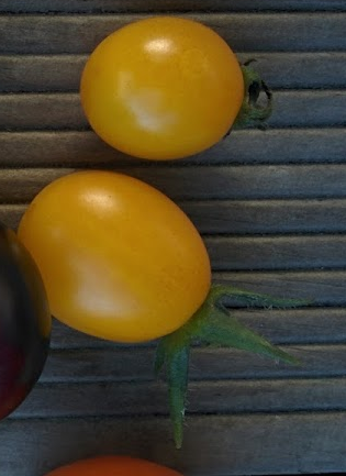 Tomato - Sunny Grape - 161MT100A