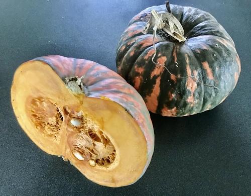 Pumpkin - Speckled Hound - 158CMK